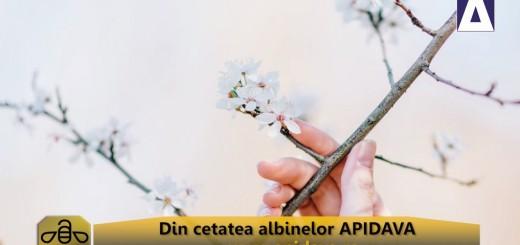 ACC - CA - Mierea de migdal de la Apidava - Realizator Cecilia Caragea