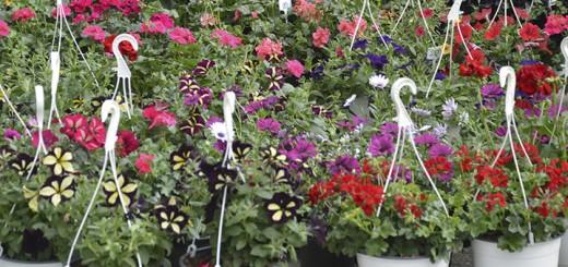Expozitia internationala de flori, amenajari peisagistice, horticultura si gradinarit, la Romexpo