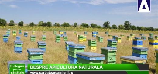 Dialoguri pentru sanatate – Despre apicultura naturala (FRANCEZA)