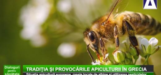 Traditia si provocarile apiculturii in Grecia eng-